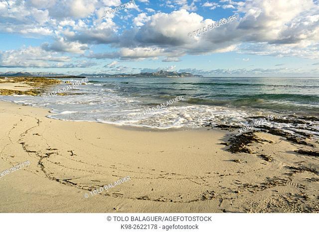 Es Dolç beach, Son Real, bay of Alcudia, Santa Margarida, Majorca, Balearic Islands, Spain