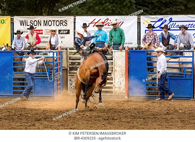 Saddle bronc riding, competition, Philomath Rodeo, Philomath, Oregon, USA