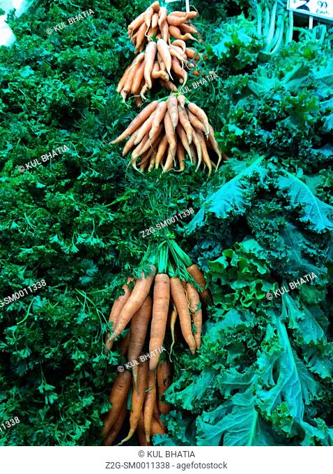 Bunches of fresh carrots at Old city market St. John, New Brunswick, Canada, North America