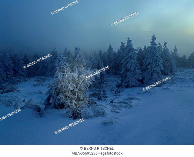 Winter morning at the Brocken, Harz, Saxony-Anhalt, Germany