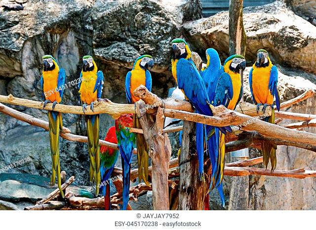 Photo of beautiful Macaws standing on timbers