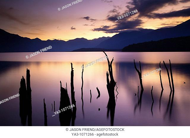 New Zealand, Fiordland, Fiordland National Park  The flooded remnants of trees pierce the tranquil waters of Lake Monowai