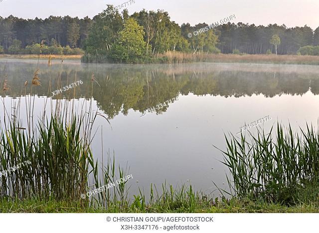 brume matinale sur un lac du Parc naturel regional Loire Anjou Touraine, environs de Langeais, departement Indre-et-Loire, region Centre-Val de Loire, France