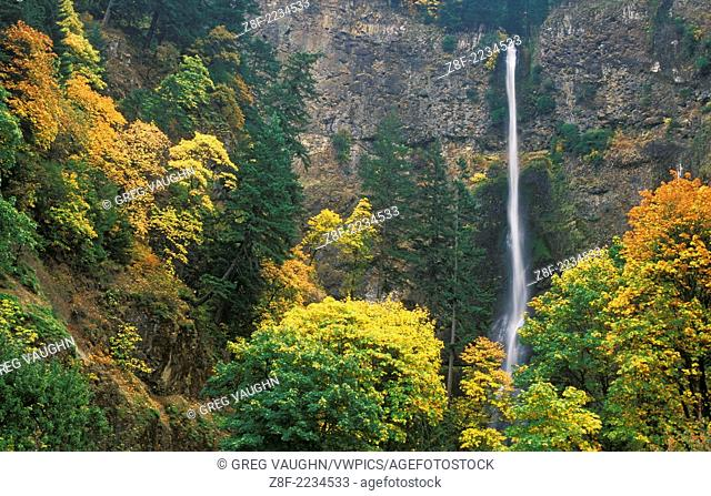 Multnomah Falls with trees in Fall color; Columbia River Gorge National Scenic Area, Oregon