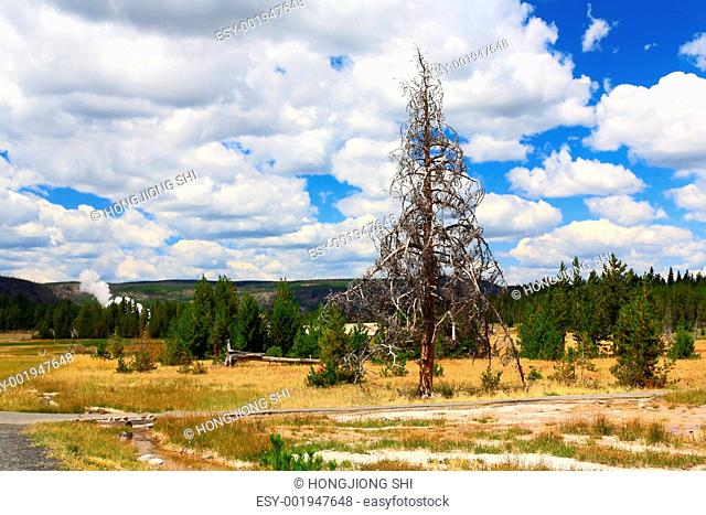 Upper Geyser Basin in Yellowstone