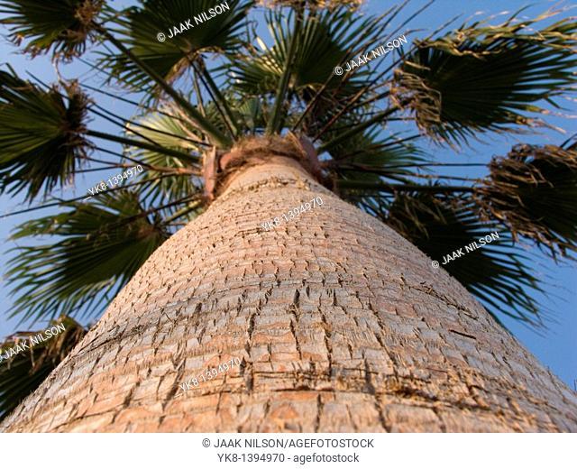 Close-Up of Palm Tree Bark