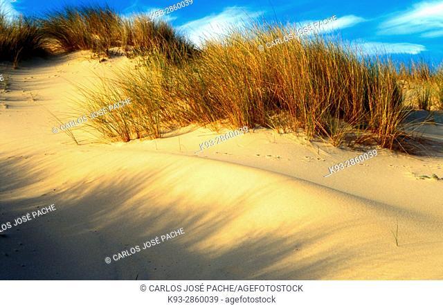 Playa y dunas del Parque Nacional de Doñana, Andalucia