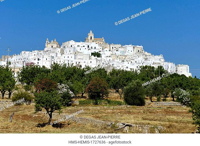 Italy, Puglia, Brindisi province, Ostuni, city in the white walls painted in the lime perched on a dominating hill one fields of olive trees