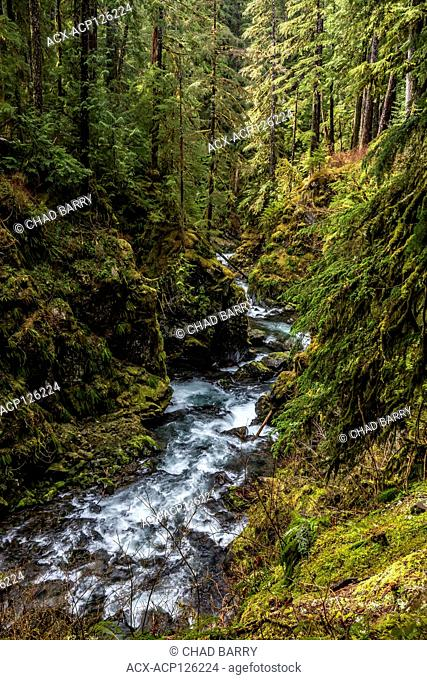 Sol Duc River, Sol Duc Rainforest, Olympic National Park, Washington, United States