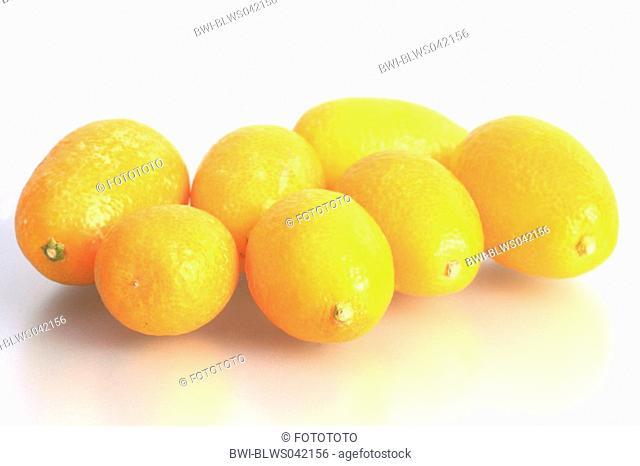 kumquat Fortunella margarita, fruits