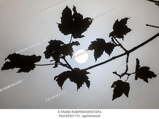 The sun peaks through mist behind a tree branch still bearing a few leaves. Photo: Frank Rumpenhorst/dpa | usage worldwide