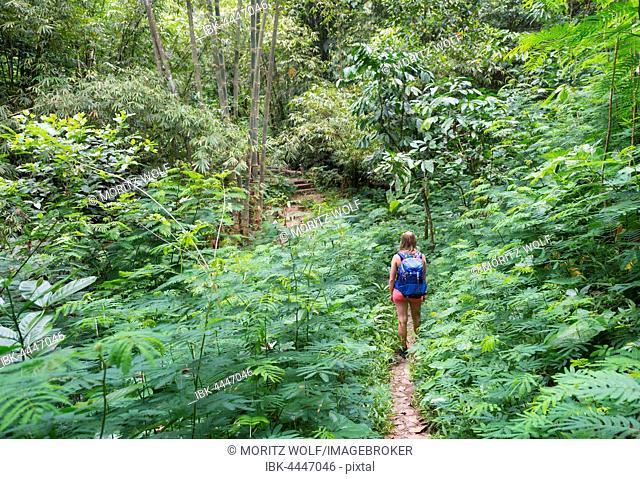 Hiker walking on trail through dense vegetation, Munduk, Bali, Indonesia