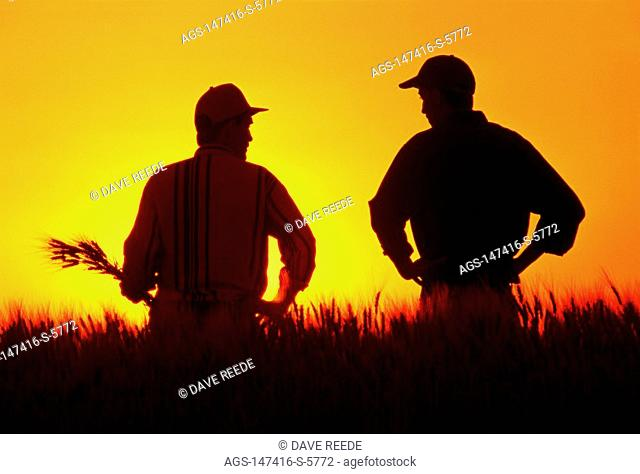Agriculture - Silhouette of a farmer and his son as they inspect and discuss their mature crop of Canadian Western Amber Durum wheat at sunset / near Ponteix