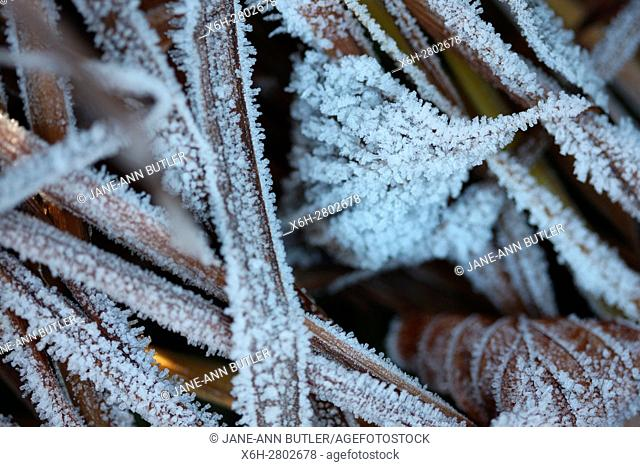 the onset of winter, cold morning frost