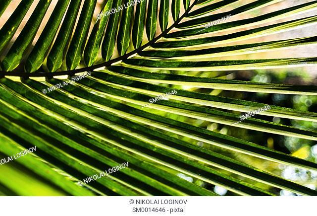 horizontal vivid vibrant green palm leaf bokeh background backdrop