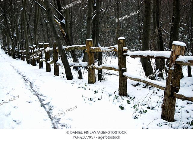 Snowy Winter day in Ruislip Woods on the outskirts of London, England. It still officially falls within the city boundaries