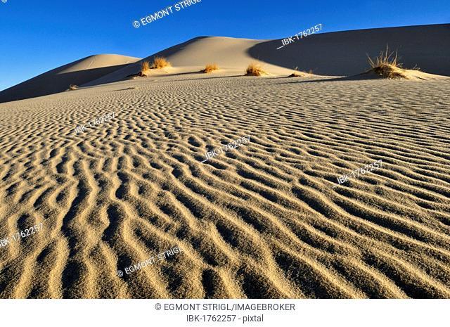 Sand dune of Erg Tihodaine, Wilaya Tamanrasset, Algeria, Sahara, North Africa, Africa