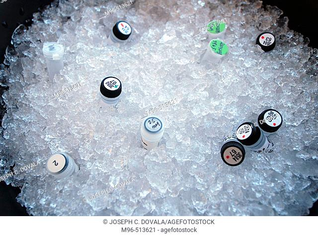 Samples on ice