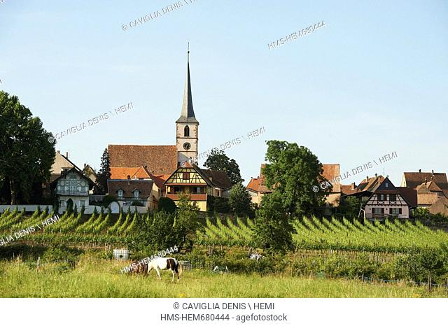 France, Bas Rhin, Mittelbergheim, labeled Les Plus Beaux Villages de France The Most Beautiful Villages of France, overview of the village in the vineyards