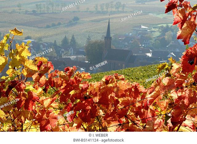 view through winw leves onto Birkweiler at the German Wine Route, Germany, Rhineland-Palatinate, Palatinate, Birkweiler