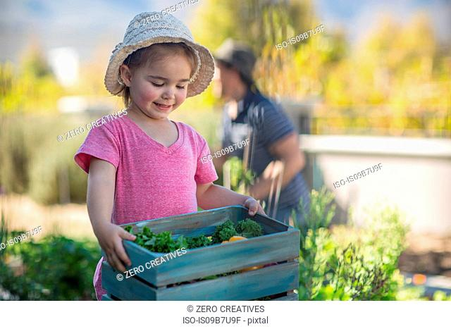 Young girl in garden, carrying wooden crate of vegetables