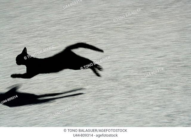 black cat jumping and shadow on floor