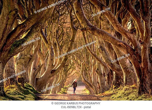 Young boy skateboarding through trees, Dark Hedges, Ballymoney, Northern Ireland, United Kingdom