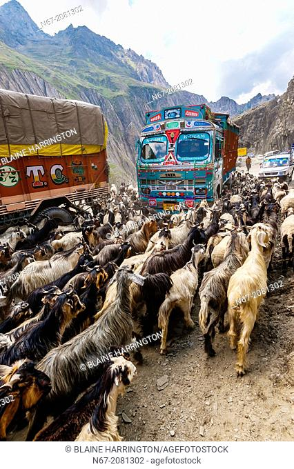 Sheep and goats being herded over the Zojila Pass, Kashmir, Jammu and Kashmir State, India