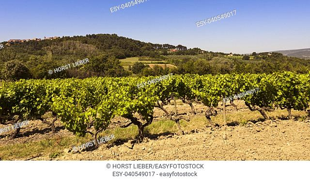 Wine growing near Roussillon. Vaucluse, Provence, France