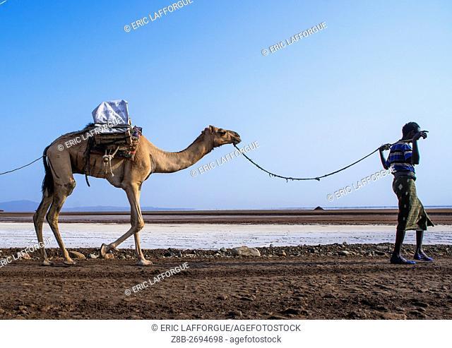 Ethiopia, Afar Region, Dallol, afar tribe man camel caravans carrying salt blocks in the danakil depression