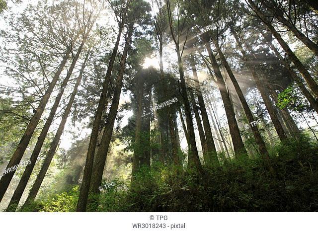 Ali,forest,sunlight