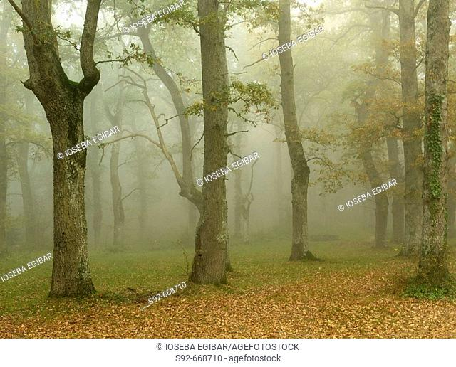 Fog. Montes de Albertia. Álava province. Spain