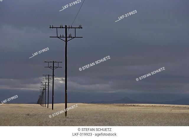 Power poles in front of thunderclouds, Namib Naukluft Park, Sossusvlei, Namibia, Africa