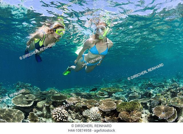 Schnorcheln auf den Malediven, Ellaidhoo Hausriff, Nord Ari Atoll, Malediven, Skin Diving at Maldives, Ellaidhoo House Reef, North Ari Atoll, Maldives