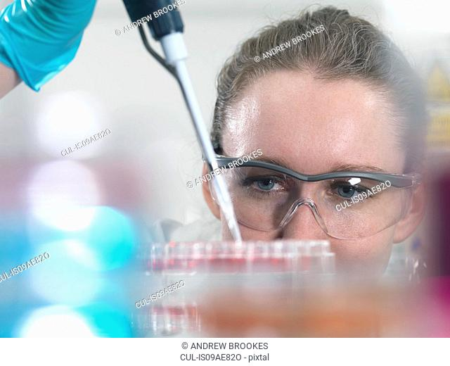 Scientist pipetting stem cell cultures into tray for pharmaceutical research