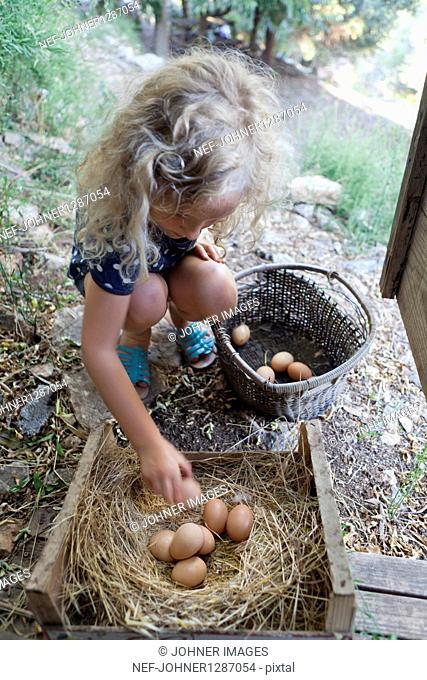 Girl picking eggs from nest