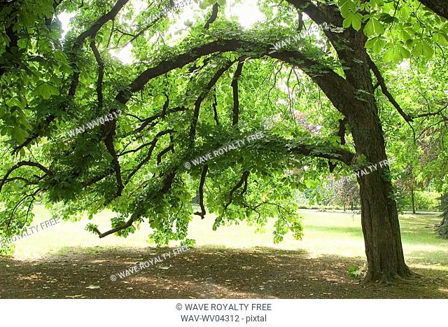 Tree, Poland