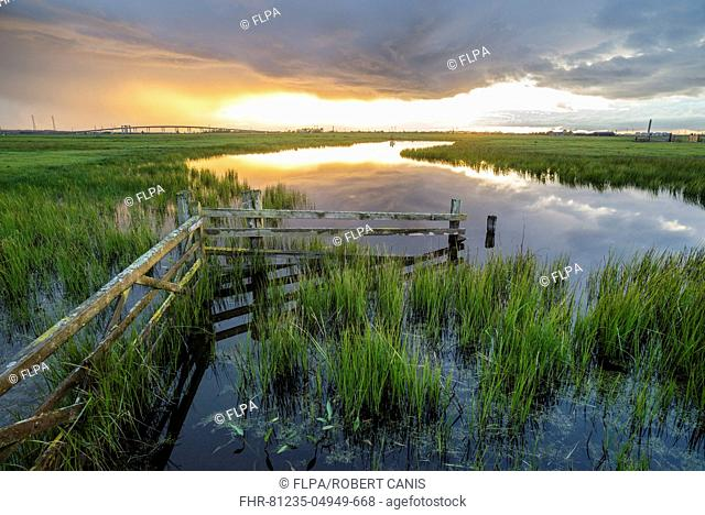 Cattle fence and pool on coastal grazing marsh habitat at sunset, Elmley Marshes N.N.R., North Kent Marshes, Isle of Sheppey, Kent, England, May