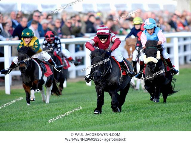 Pictured this afternoon - 17/10/16 Forget about the Grand National – the biggest horse-racing event on the calendar in Sussex starred junior jockeys racing for...