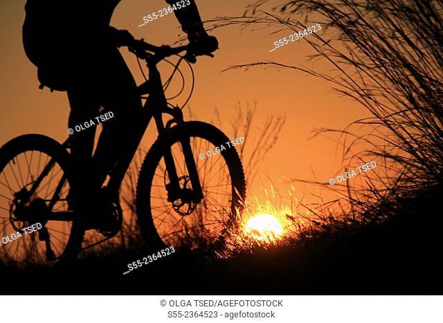 Biker in the sunset. Collserola mountain, Barcelona, Catalonia, Spain