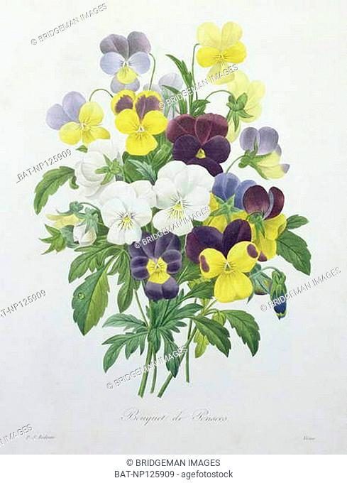 Bouquet of Pansies, engraved by Victor, from 'Choix des Plus Belles Fleurs', 1827 (coloured engraving), Redoute, Pierre Joseph (1759-1840) (after) / Private...