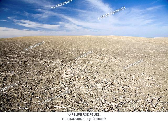 Empty landscape, summertime, Andalusia, Spain