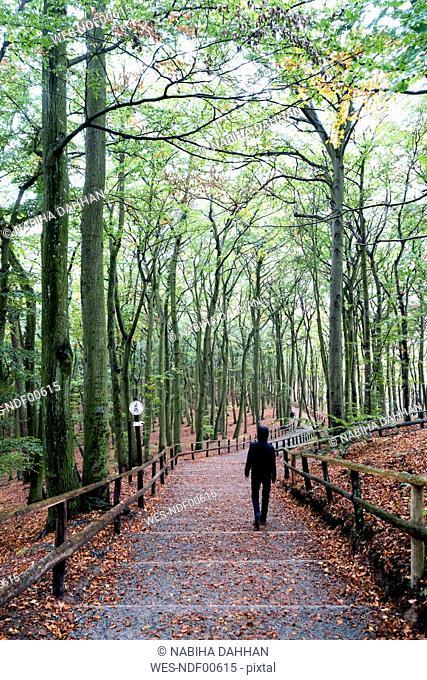 Poland, Misdroy, man walking in beech forest