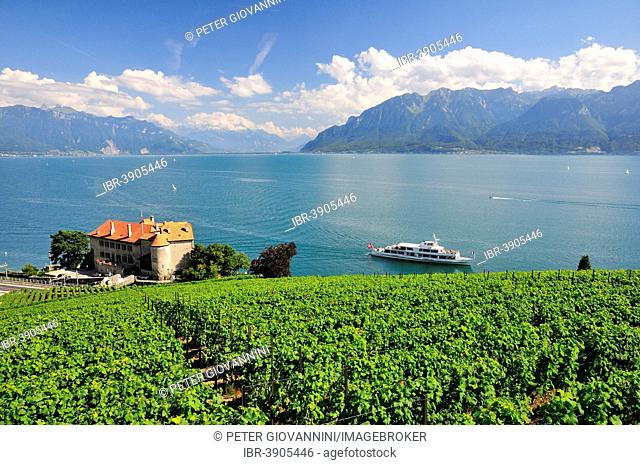 Views over the vineyards with Château de Glérolles and Lake Geneva towards the Swiss Rhone Valley, Saint-Saphorin, Lavaux, Canton of Vaud, Switzerland