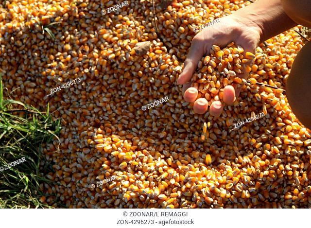 Future pop corn