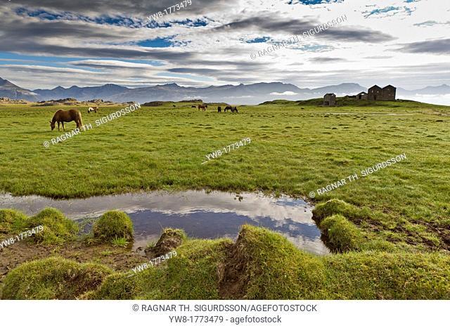 Horses grazing by abandoned house, Vidbordssel farm, Hornafjordur, Iceland