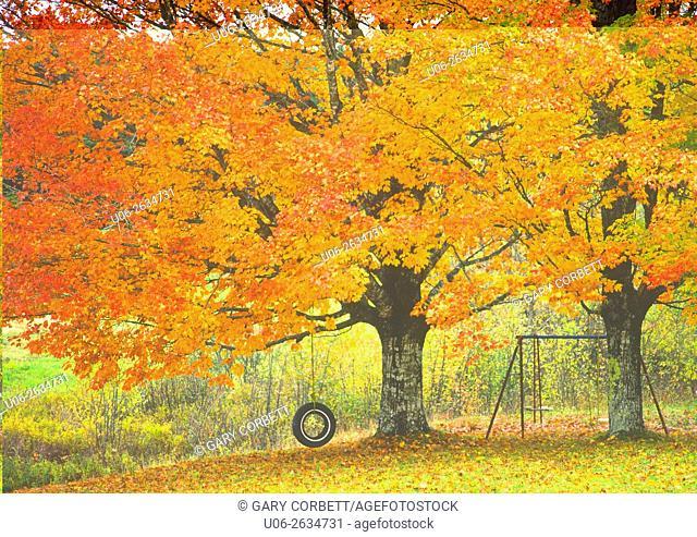 Canada, Nova Scotia, Autumn color maple trees with tire swing