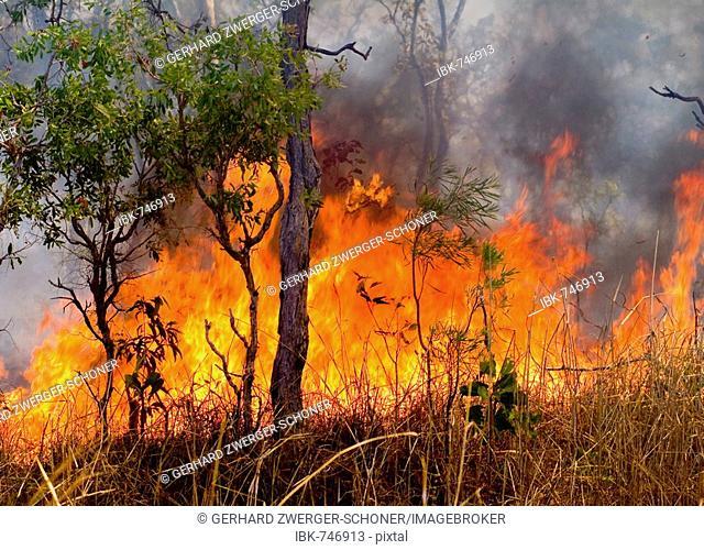 Bush fire, forest fire in Western Australia, Australia