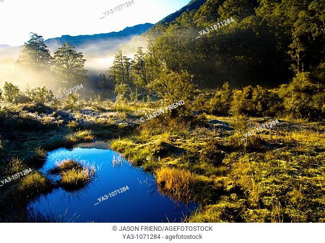 New Zealand, Southland, Fiordland National Park  Autumn mist rising from marshland near the Upper Spey hut on the Dusky Track