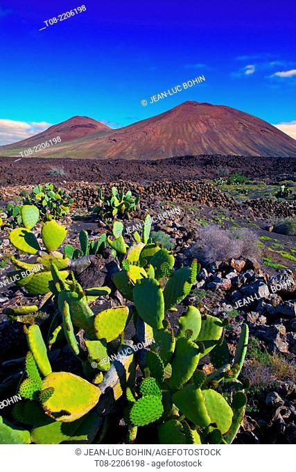 spain,canary islands,lanzarote : montana tremesana